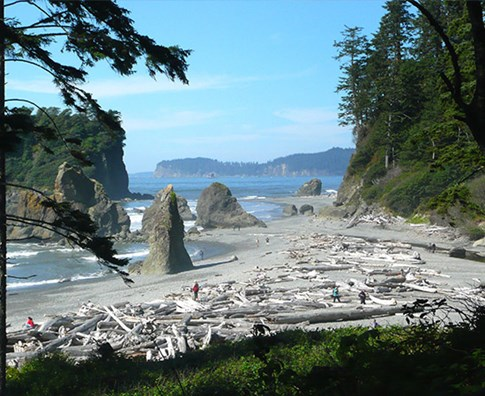 Trees and beach in Olympic National Park, Washington