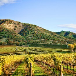 San Francisco &  Wine Country Delights