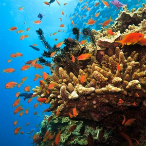 australia-great-barrier-reef-coral-and-fish.jpg