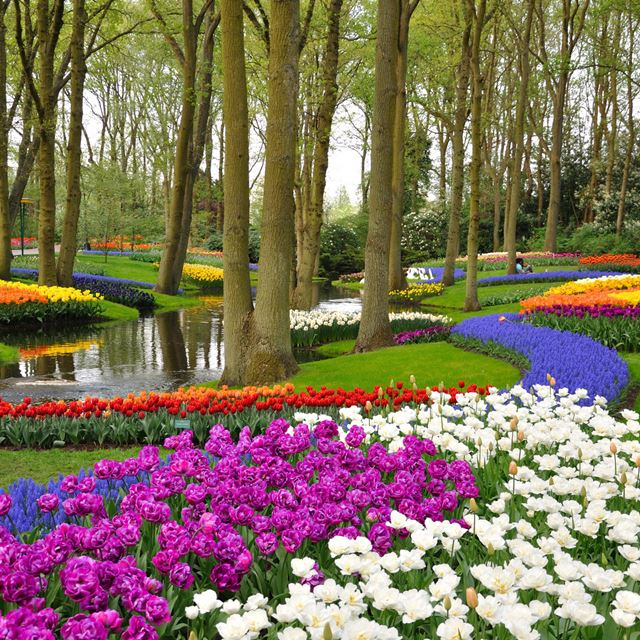 Spring Flowers In Amsterdam Vacation Package Grand European Travel
