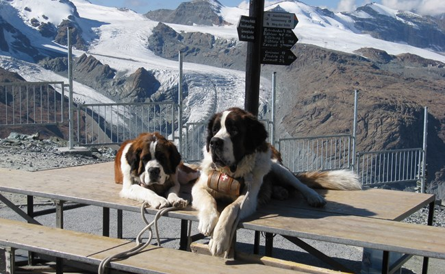 switzerland-matterhorn-mountain-dogs.jpg