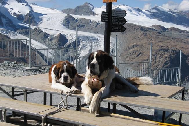 Best Of Switzerland Grand European Travel