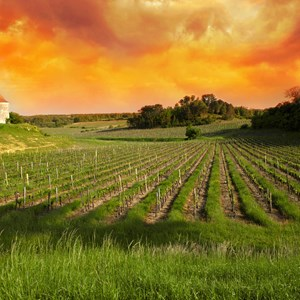 france-saint-emilion-vineyards-at-sunset.jpg