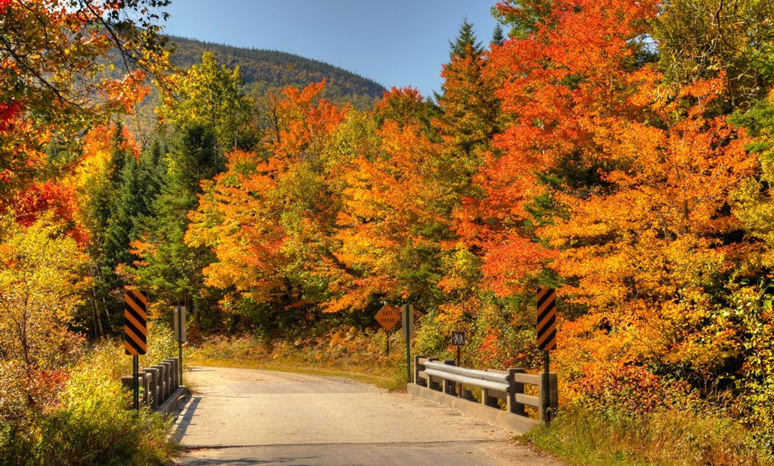 Image result for autumn colors