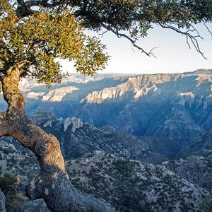 mexico-copper-canyon-tree-foreground.jpg