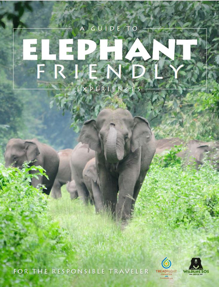 Find out how to BEE with our Elephant Friendly Experiences Guide!
